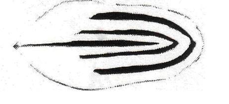 pencilled.jpg